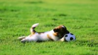 fondo_hd_169_cachorro_perro_jugando_balon