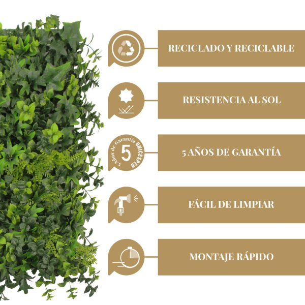 Caracteristicas Lavandula Lvy