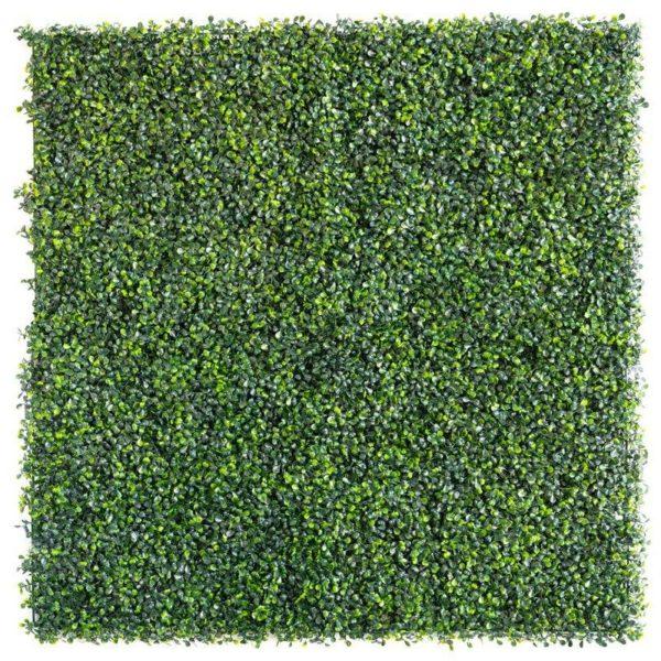 Boxwood light green