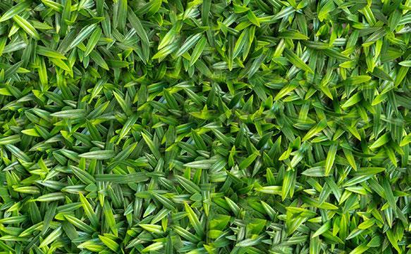 Lavender Leaf ampliado