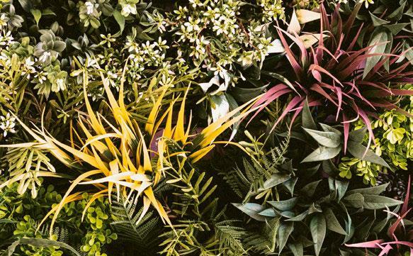 Forest Garden Ampliado